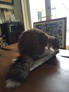 キキちゃんは新聞の上が大好き
